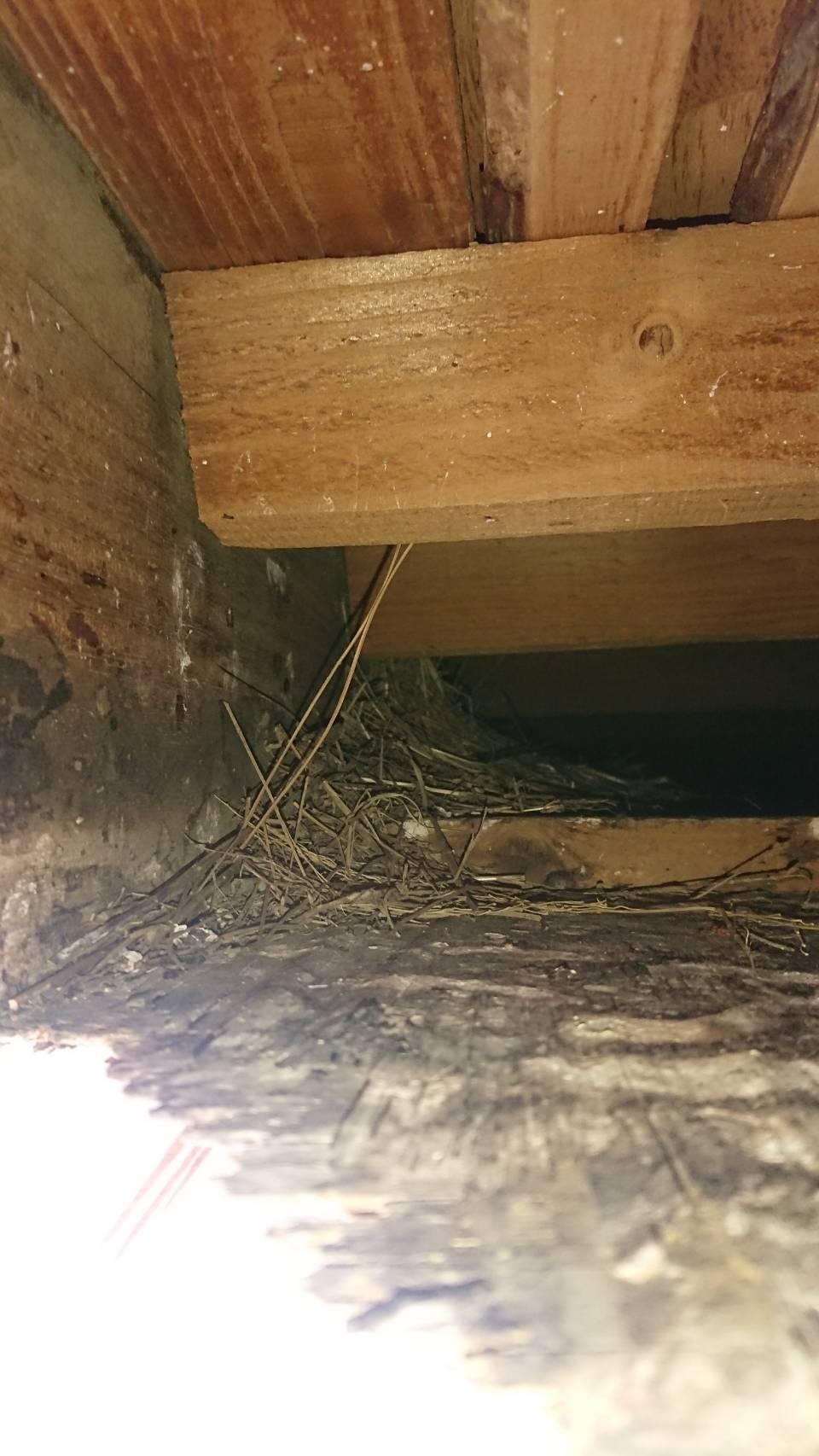 軒天内の鳥の巣