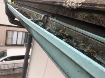 伊奈町 雨樋のコケ 屋根のコケ