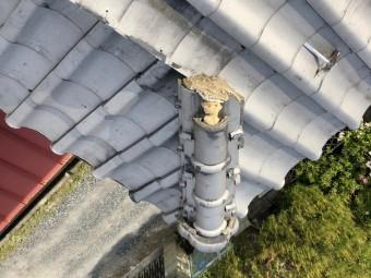 瓦屋根棟 破損 写真