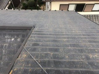 コロニアル屋根 コケ