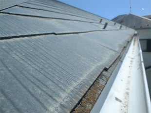 屋根のコケ・藻