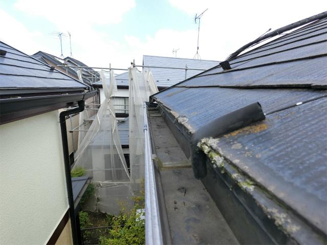 屋根苔による汚れ