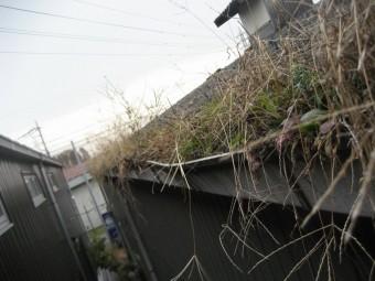 雨樋に雑草が溜まった写真