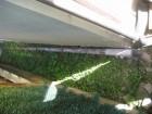 上尾市で雨樋崩落の写真